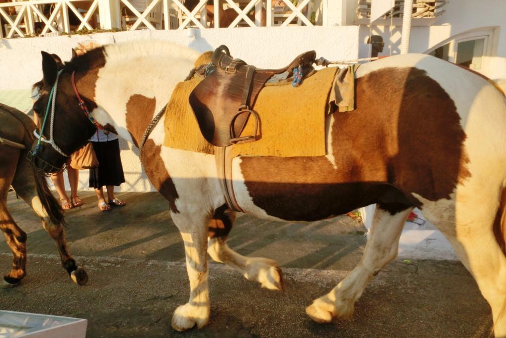 150714-7聖托里尼島費拉驢子