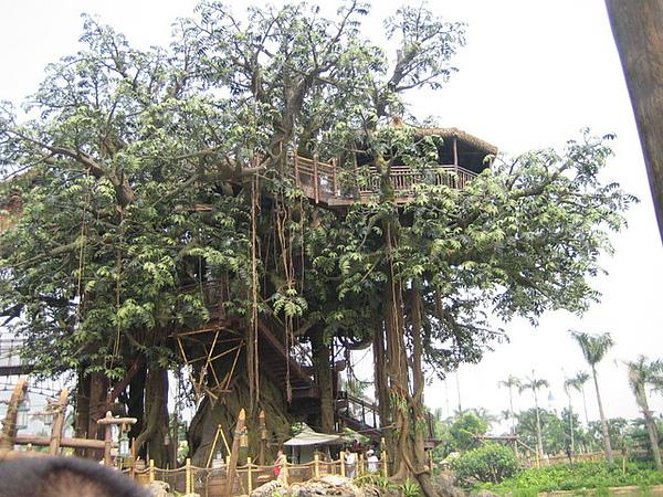 泰山的樹屋