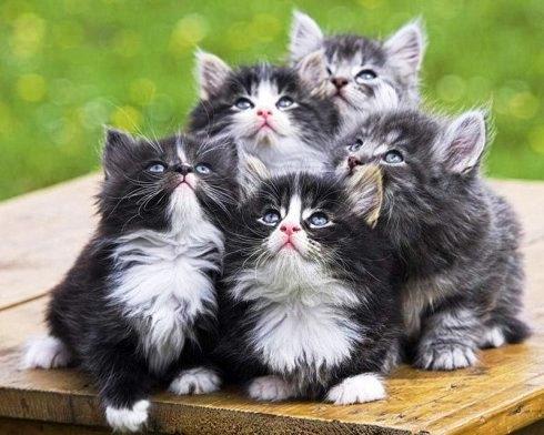 貓咪親見本尊.jpg