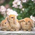 兔子5.jpg