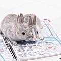 兔子6.jpg