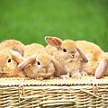 兔子7.jpg