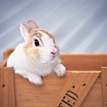 [wallcoo_com]_Lovely_rabbit_Picture_1da033004s.jpg