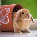 [wallcoo_com]_Lovely_rabbit_Picture_1da033025s.jpg