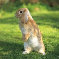 [wallcoo_com]_Lovely_rabbit_Picture_da033097s.jpg