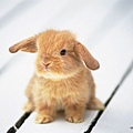 [wallcoo_com]_Lovely_rabbit_Picture_da033062s.jpg