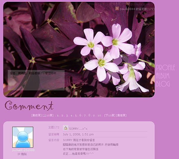 紫色酢漿草 完成日期:08/07/02
