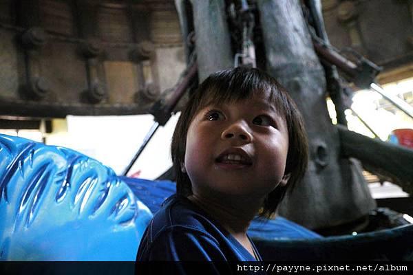 20111105-這巨嘴鳥是啥玩意兒??... 有點兒害怕樣....
