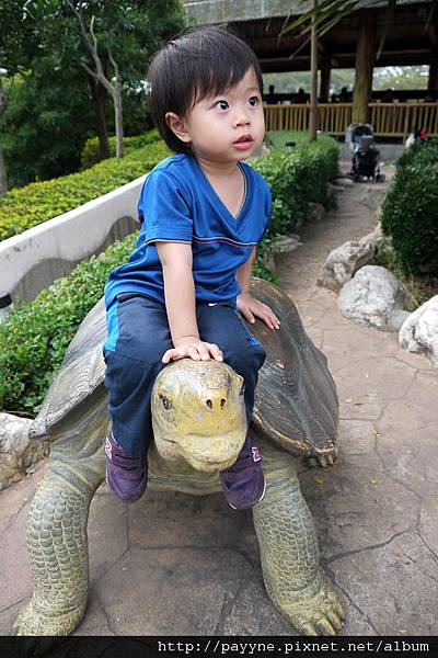 20111105-來了幾次每回都要坐這烏龜...