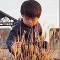2012.12.29-認真摘蘆葦花的時刻
