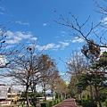 2013.02.13-沿途風景很美...可惜鏡頭沒補捉到地方是密密麻麻的腳踏車......