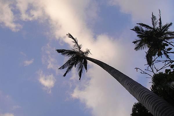 椰子樹的天空