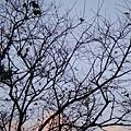 枯樹的天空