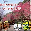 淡水名產娃娃-2014賞櫻花