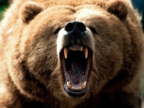 Great_Grizzly_Bear_Bellowing.jpg