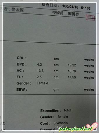 【17W6d】超音波報告一角
