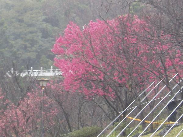 陽明山~ 047.JPG