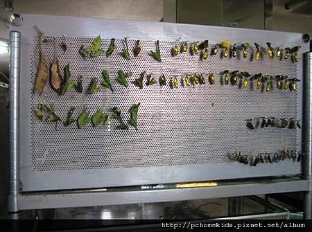 木生昆蟲博物館6.JPG