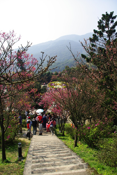 走在開滿櫻花的路上,感覺到春天的溫暖.JPG