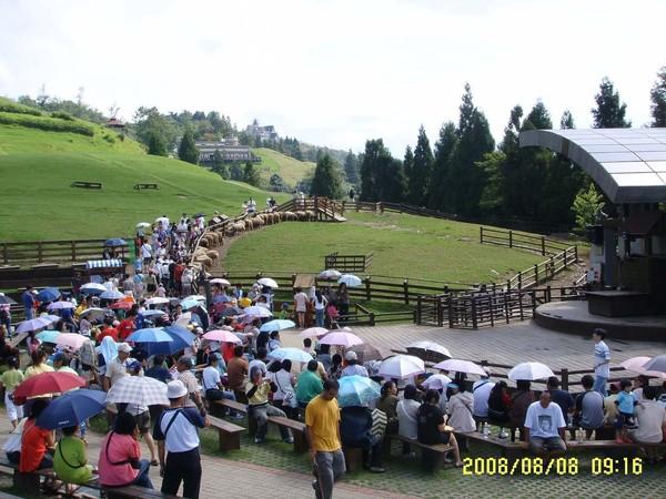 綿羊show