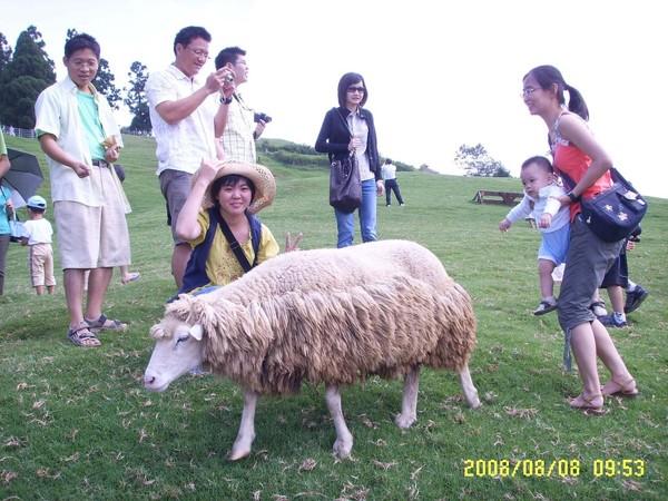 羊兒,別跑