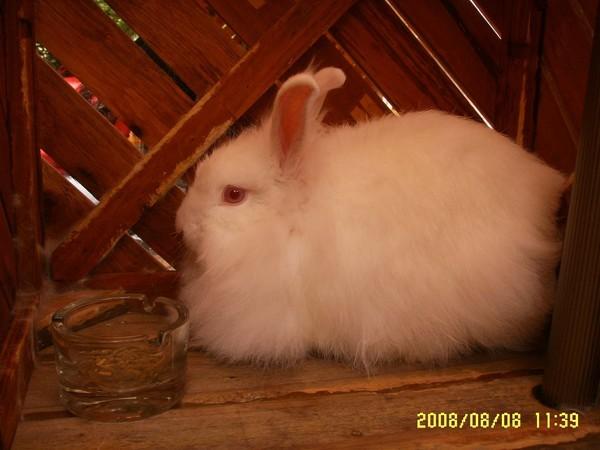 路途中的小兔