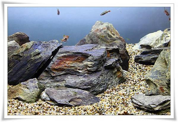 石頭3.JPG
