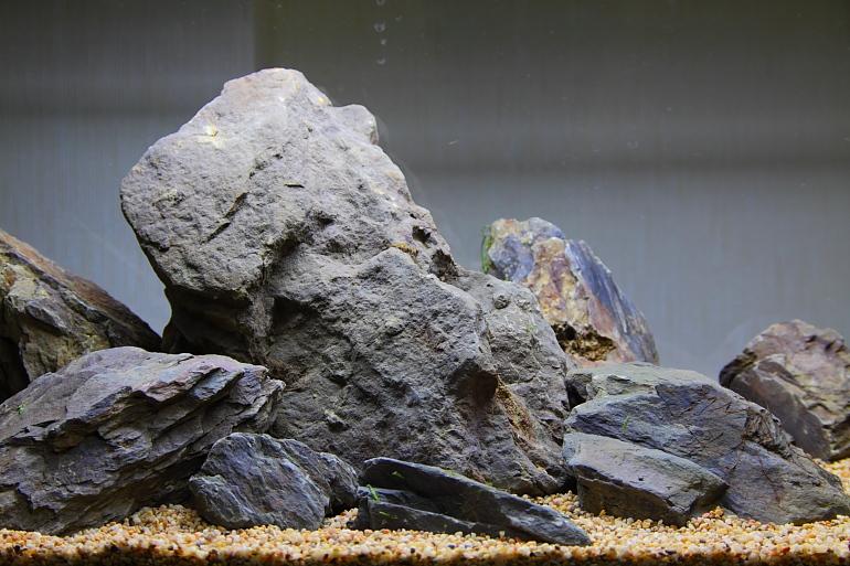 頁岩.JPG