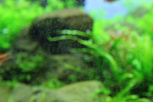 缸壁上的藻類1