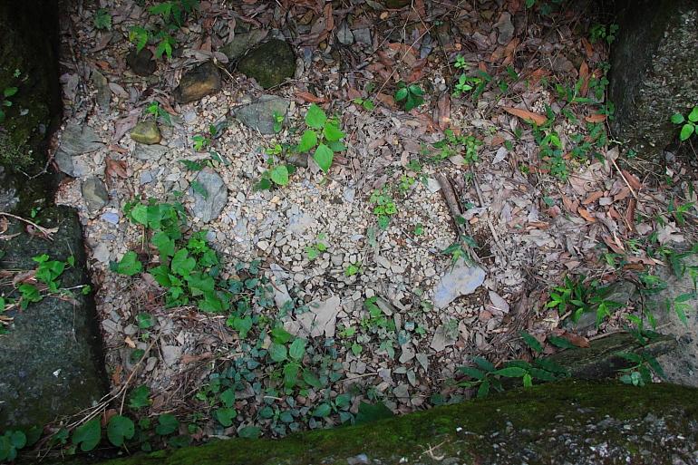 排水溝內就有岩石