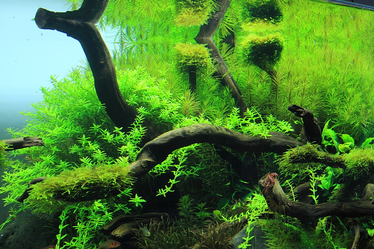綠色水草特寫770