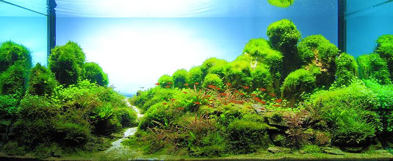魚中魚成景圖770