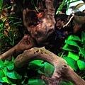 流木上的藻類