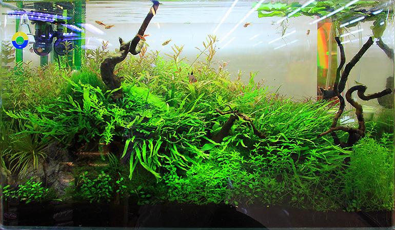 魚中魚展示缸2