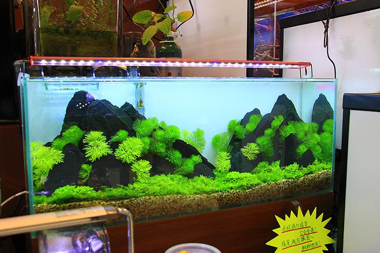 魚中魚展示缸3
