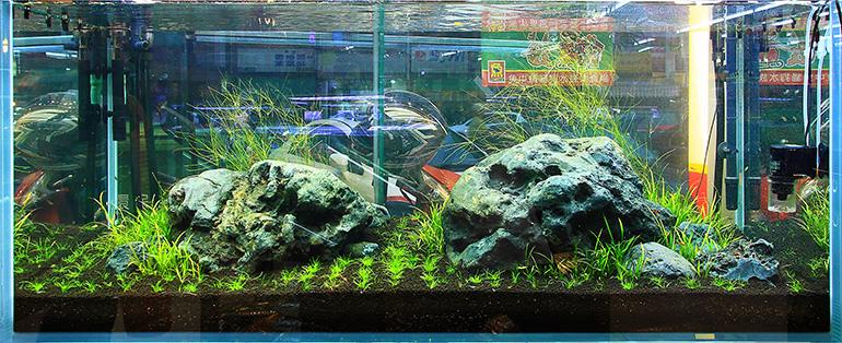 魚中魚石景缸1