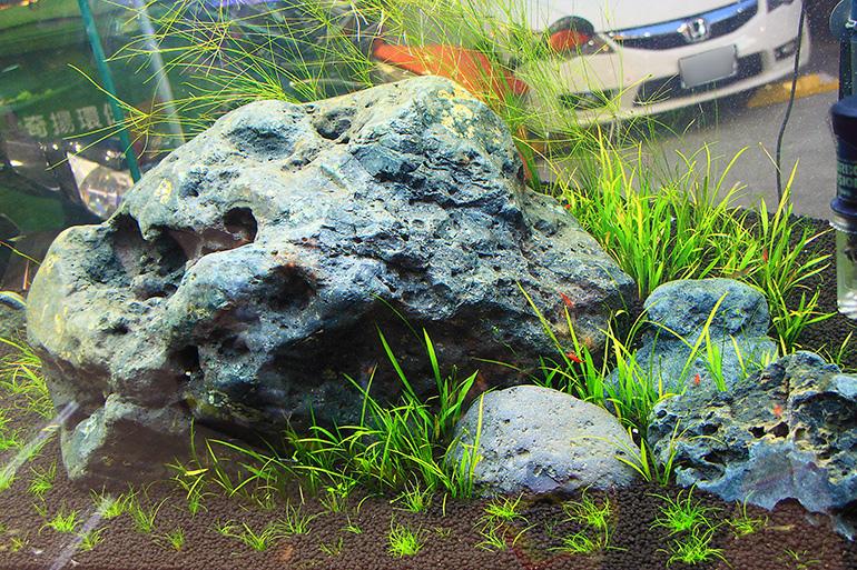 魚中魚石景缸2