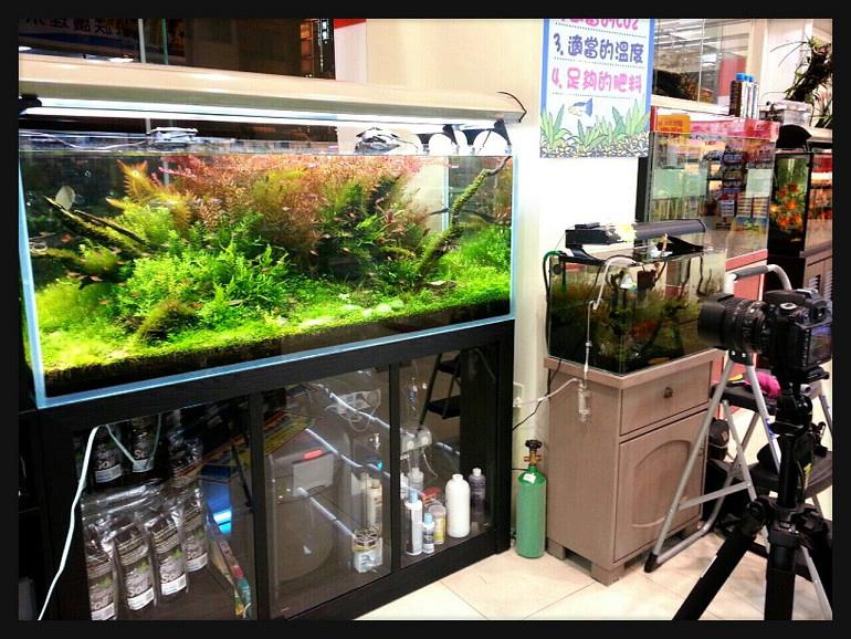 魚中魚展示缸