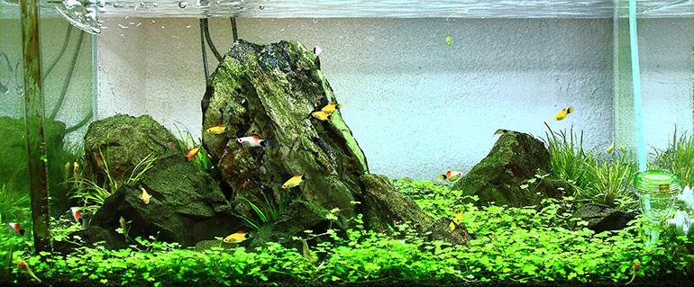 魚窩水族1