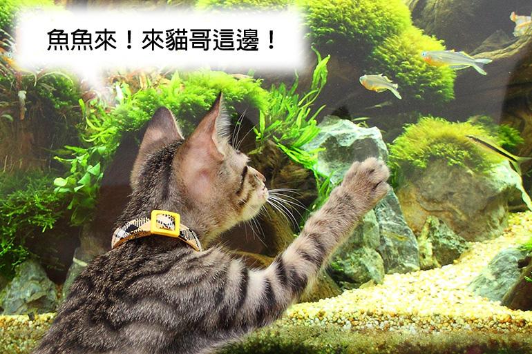 魚魚來770