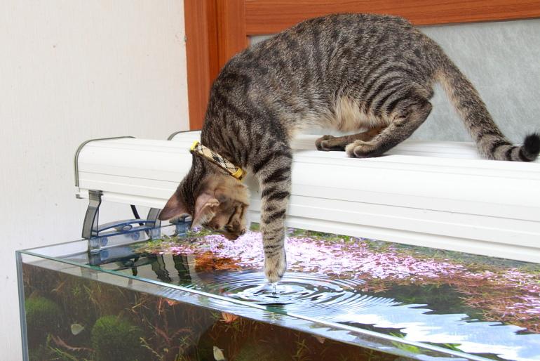 專家檢測水質