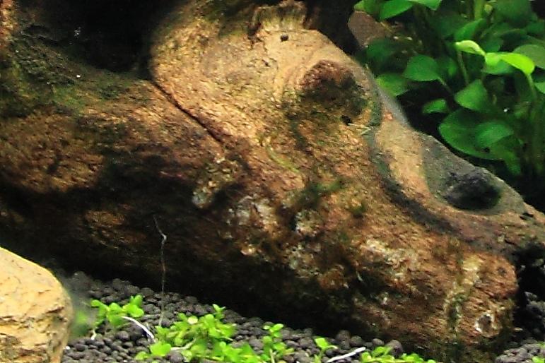 沉木剛入水
