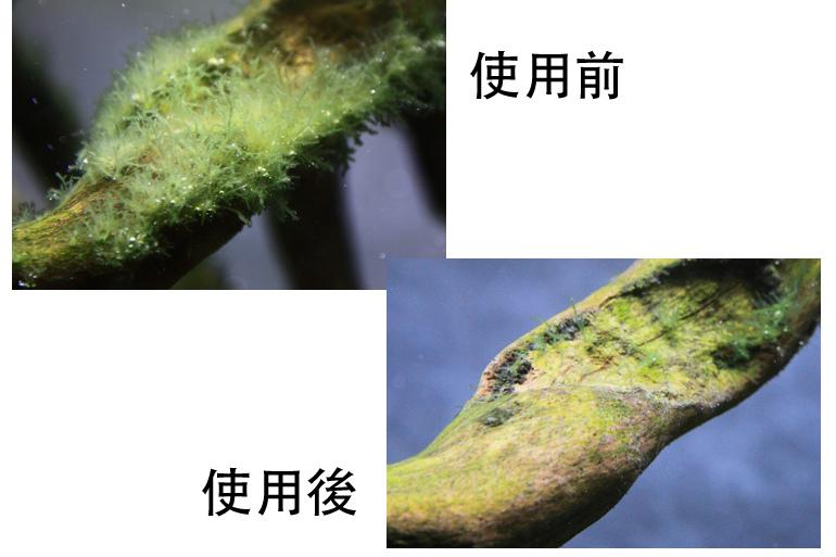 除藻成效1