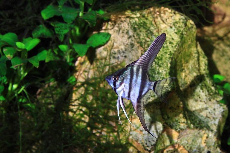 斑馬神仙1
