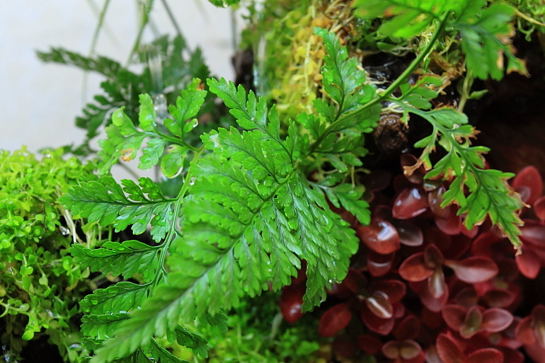 陸生植物2