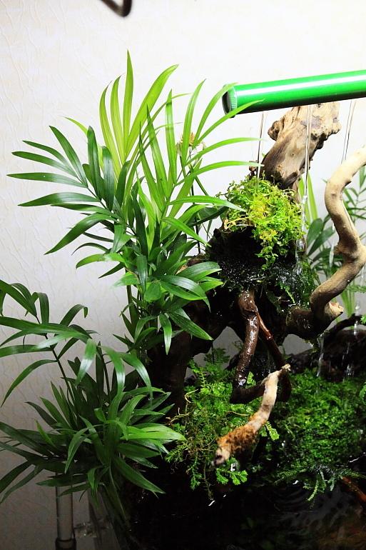 陸生植物1