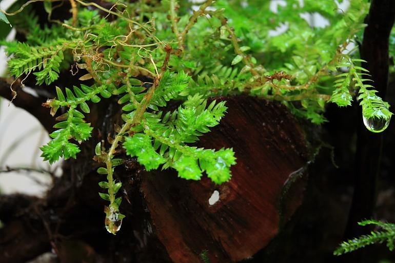 陸生植物3
