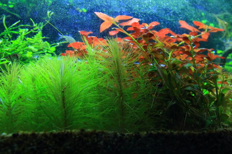 缸壁上的藻類