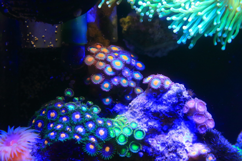 綠海_X9A0752