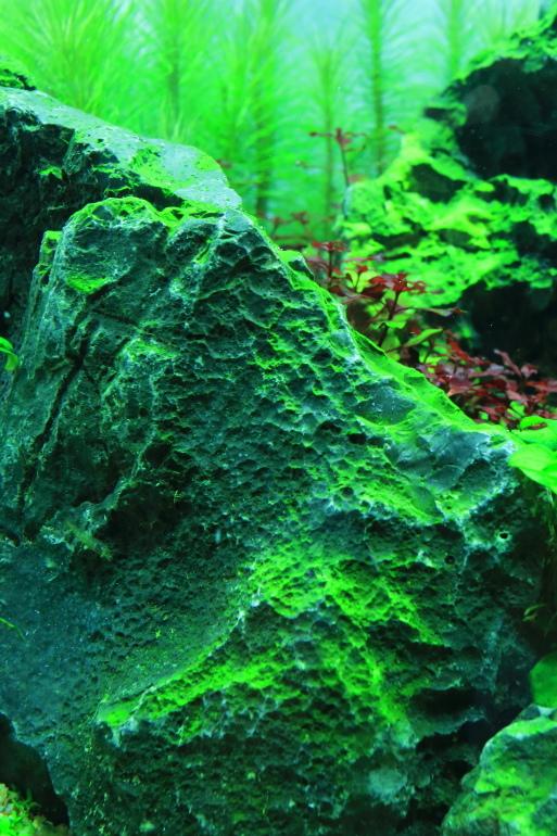 藻類也增豔.JPG